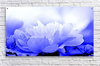 Heavenly Peony Blue  Acrylic Print