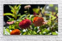 Gorgeous Flower Color  Acrylic Print