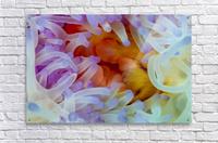 Sea Anemone 5  Acrylic Print