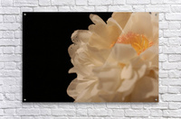 Anther  Acrylic Print
