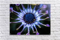 purple alien  Acrylic Print