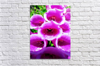MOUTH OF THE DIGITALIS  Acrylic Print