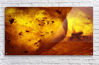Ancient Insects Trapped in Amber  Acrylic Print