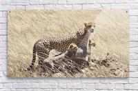 Mama Cheetah  Acrylic Print