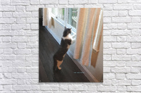 Curiosity  Acrylic Print