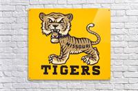 1950s Missouri Tigers Art Print  Acrylic Print