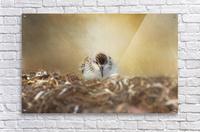 Simplicity of Nature  Acrylic Print