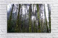 Trees of the Killarney National Park Co. kerry Ireland Europe 2018  Acrylic Print