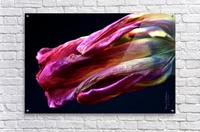 Tulip 3  Acrylic Print