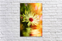 Sun worshippers yellow  Acrylic Print