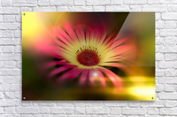 little sunshine  Acrylic Print