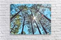 Tree Tops  Acrylic Print