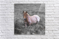 Wild Horses, New Forest  Acrylic Print