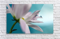 In turquoise Company  Acrylic Print