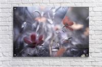 Une Fleur, une Histoire by Fabien BRAVIN   Impression acrylique