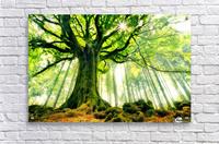 Ponthus Beech by Christophe Kiciak   Acrylic Print