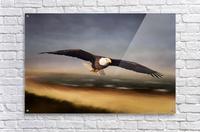 Raptor Skies  Acrylic Print