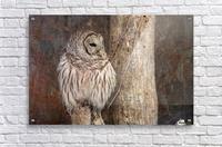 Barred Owl in Grunge  Acrylic Print