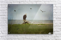 Bald Eagle on Tree Trunk  Acrylic Print