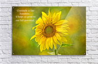 Gratitude is Like Sunshine  Acrylic Print