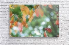landscape_2_1026  Acrylic Print