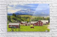Bar U Ranch National Historic Site; Longview, Alberta, Canada  Acrylic Print