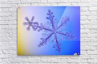 Photomicroscopic close up of two snowflake crystals, Alaska  Acrylic Print