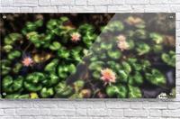 Lillypad  Acrylic Print