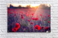 Beautiful Sunset poppy flowers  Acrylic Print