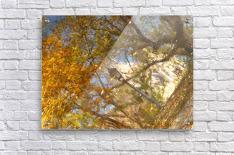 Autumn Reflections I  Acrylic Print