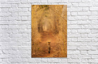 The Tiger in  the Tunnel  Acrylic Print
