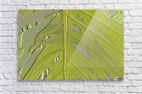 Leaf Texture Background  Acrylic Print