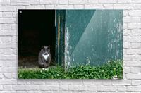 Cat In A Doorway  Acrylic Print