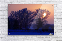 Sun Peeking Through Some Trees  Acrylic Print