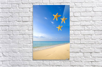 Starfish Falling In Front Of The Ocean  Acrylic Print