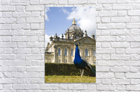 Peacock In Front Of A Building  Acrylic Print