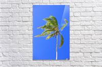 Palm Tree Against Clear Blue Sky  Acrylic Print