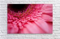 Close Up Of A Pink Flower  Acrylic Print