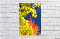 Autumn Trees  Acrylic Print