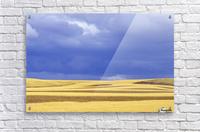 Wheat Fields Near Hermiston, Oregon, Usa  Acrylic Print