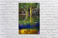 Reeds Reflecting On The Water; St. Albert, Alberta, Canada  Acrylic Print