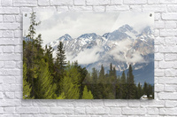 A Forest And The Rocky Mountains; Jasper, Alberta, Canada  Acrylic Print