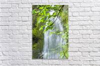 Marymere Falls, Olympic National Park  Acrylic Print