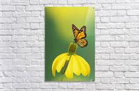 Caterpillar to butterfly;British columbia canada  Acrylic Print