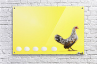 Hen standing in line with five eggs;British columbia canada  Acrylic Print