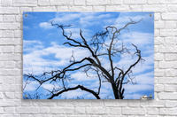 A dead tree is silhouetted against the sky; Tahlequah, Oklahoma, United States of America  Acrylic Print