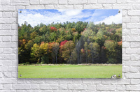 Colourful trees in autumn; Woodstock, Vermont, United States of America  Acrylic Print
