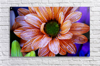 FPS-0058  Acrylic Print