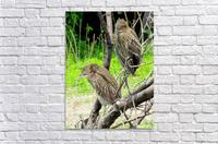 Birds in Lincoln Park   Acrylic Print