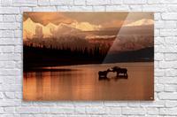 Moose Kissing  Acrylic Print